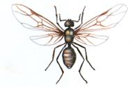 アリの羽アリ
